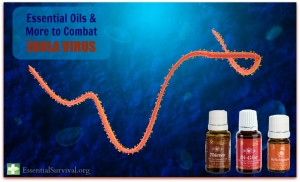 I can't believe people believe this: Essential-Oils-to-Combat-Ebola-virus